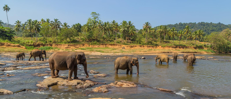 Дикий детский дом слона, Шри-Ланка стоковые изображения