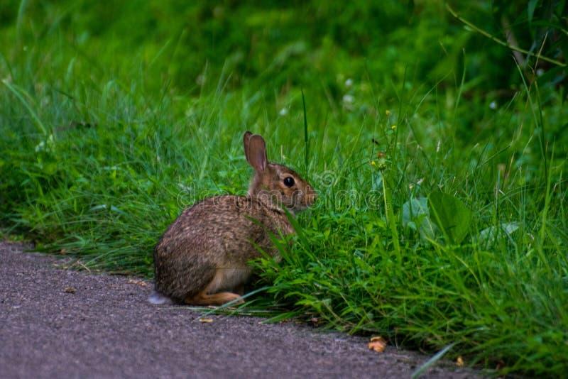 Дикий и очень милый кролик стоковое изображение rf