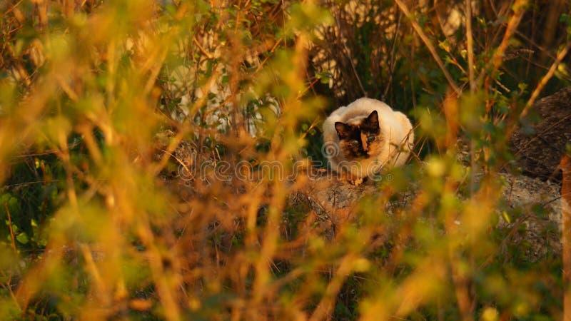 Дикий кот видит до конца кусты стоковое фото rf
