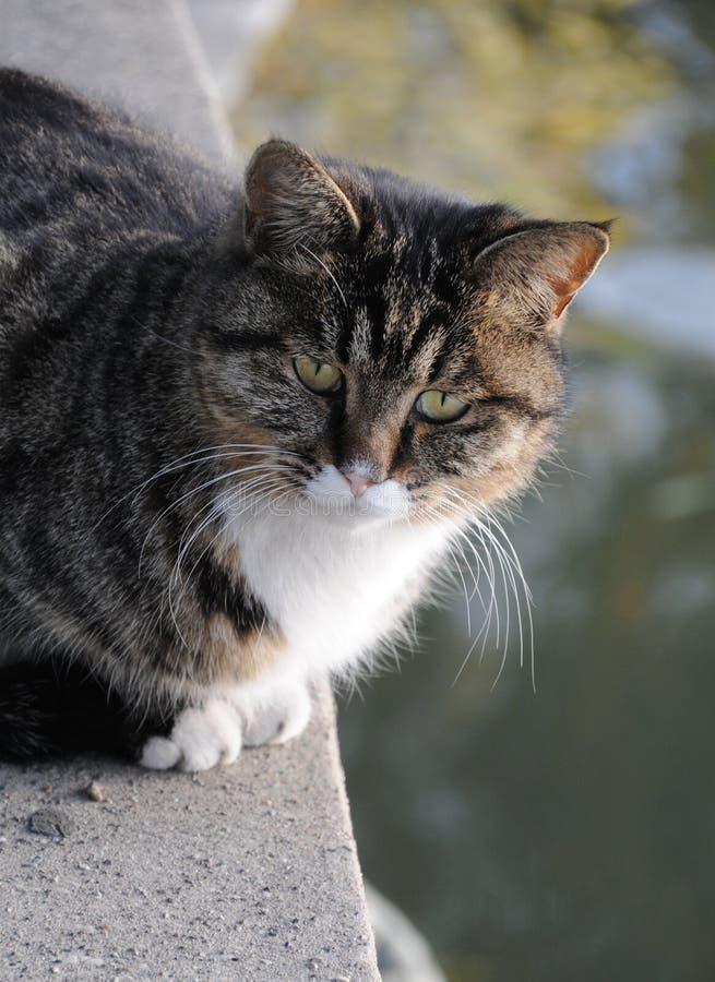 20191119 Дикий кот в Бейхай-Парке, Пекин, Китай стоковое изображение