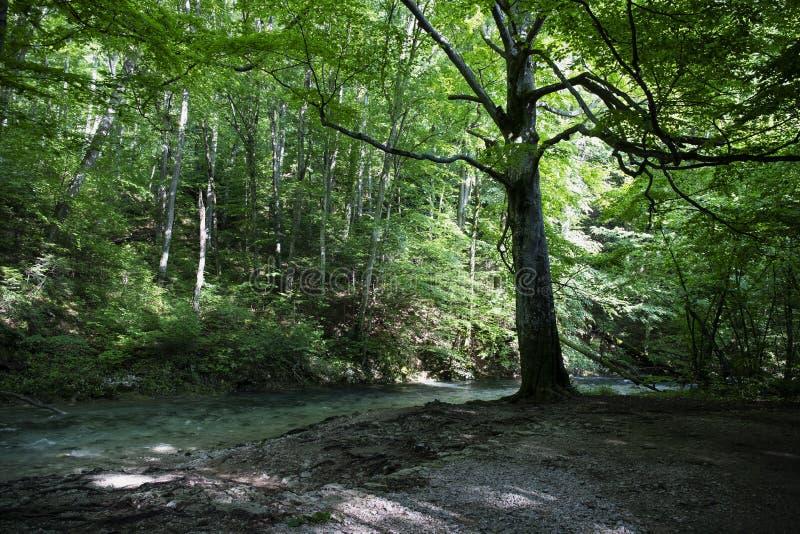 Дикий лес с голубым рекой вперед и фото acro дороги чудесного леса деревенским, белым стоковое фото rf