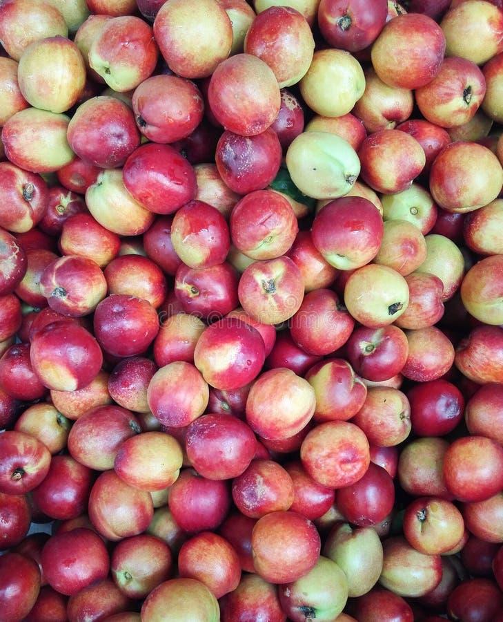 Дикий персик стоковое изображение rf