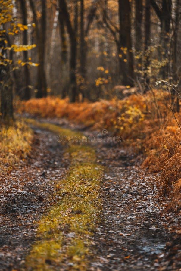 Дикий путь в Отуман Вудленде или парке стоковые фото