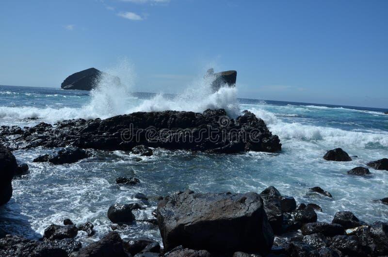 Дикий см. на Mosteiros, Sao Мигель, Азорских островах, Португалии стоковые фотографии rf