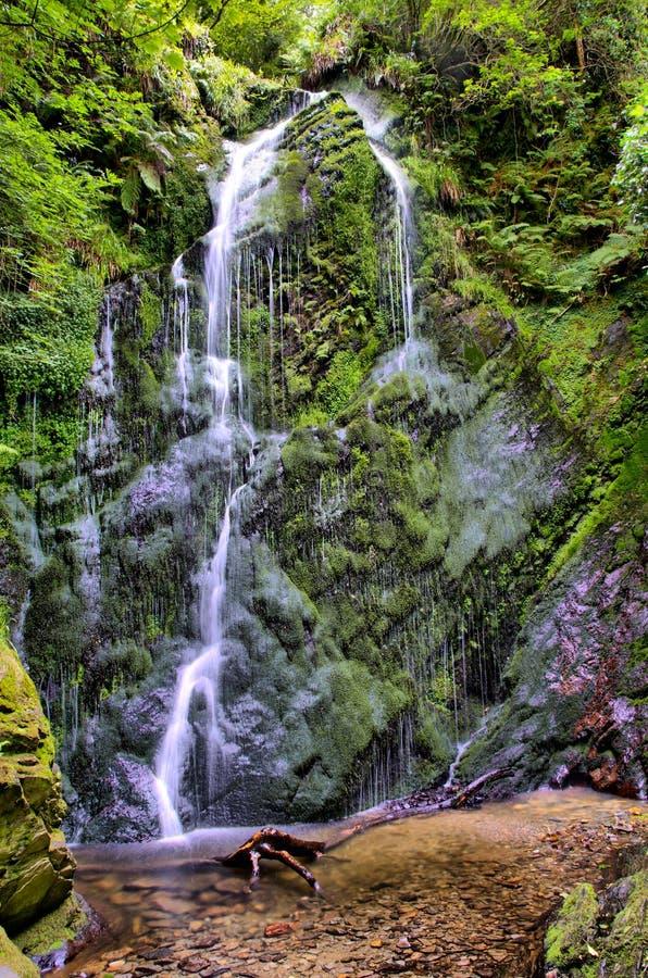 динамически forrest водопад высокого ряда hdr стоковое изображение