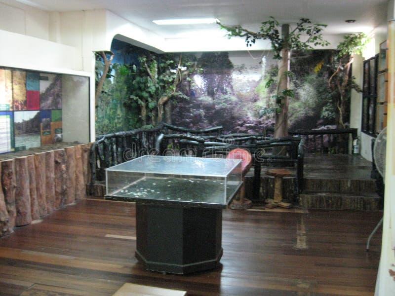 Дисплеи внутри музея естественной истории около Лос Banos, Филиппин стоковая фотография