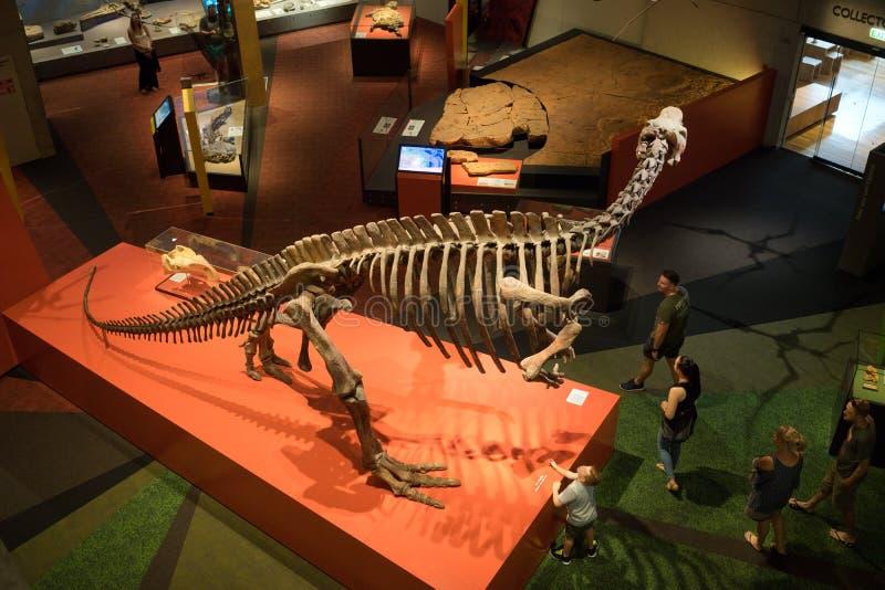 Дисплей динозавра музея Квинсленда каркасный стоковое изображение rf