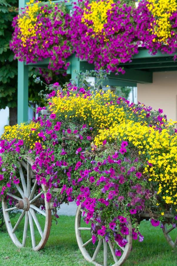 Дисплей фуры цветка падения стоковая фотография rf