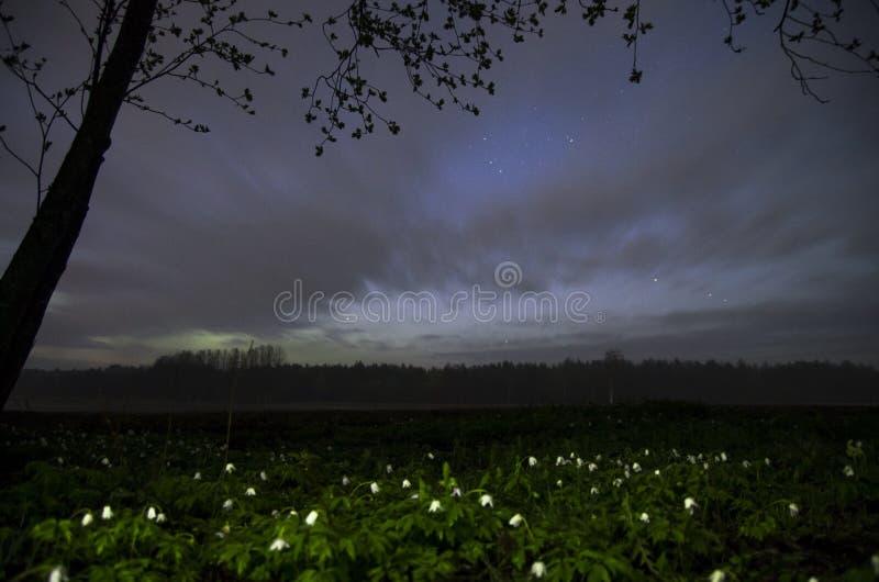 Дистантное северное сияние с одичалыми ветреницами стоковая фотография rf