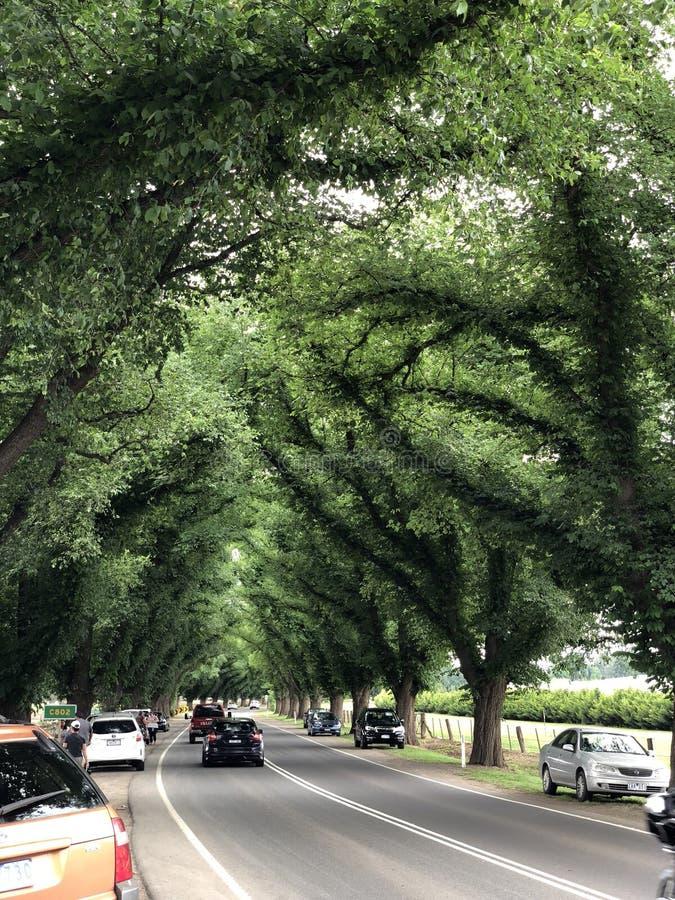 Длинная густолиственная картина деревьев стоковые изображения rf