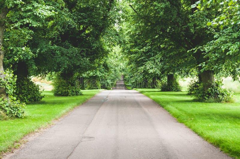 Длинная прямая проселочная дорога выровнянная с деревьями, прямая дорога без автомобилей водя к горизонту стоковые изображения rf