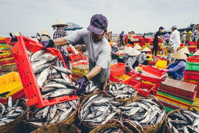 ДЛИННОЕ HAI, ВЬЕТНАМ - 3-ЬЕ ИЮЛЯ 2016: Продавцы рыб в длинном рынке Hai подготавливают морских рыб для рынка утра стоковые фотографии rf
