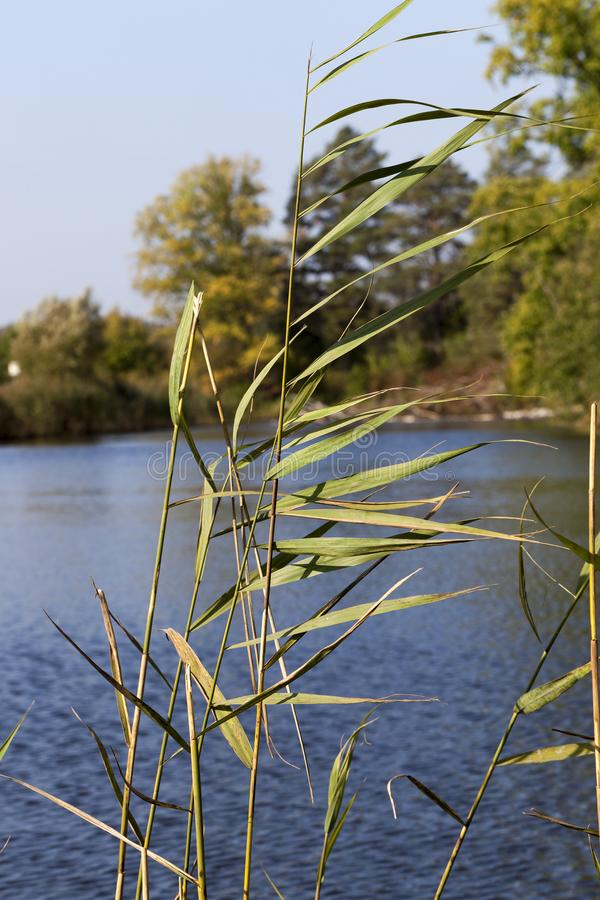 длинные стержни травы стоковые изображения