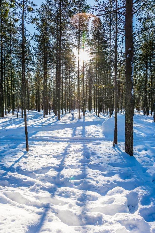 Длинные тени пересекают глубокие смещения снега стоковая фотография