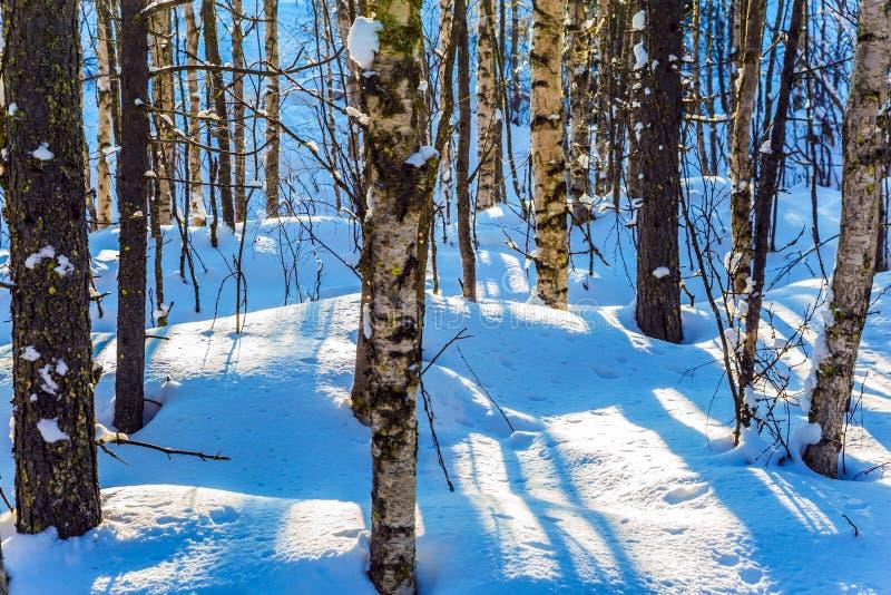 Длинные тени пересекают смещения снега стоковая фотография