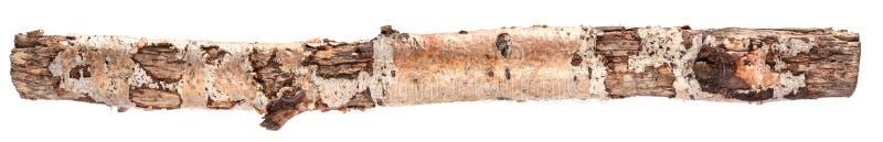 Длинный изолированный журнал березы стоковое изображение