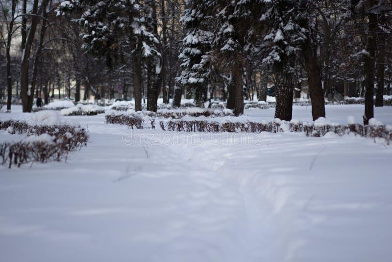 длинный и глубокий снежный путь в лесе зимы стоковое фото