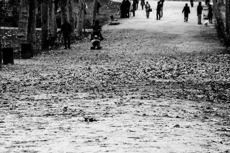 Длинный и красивый путь осени стоковое фото rf