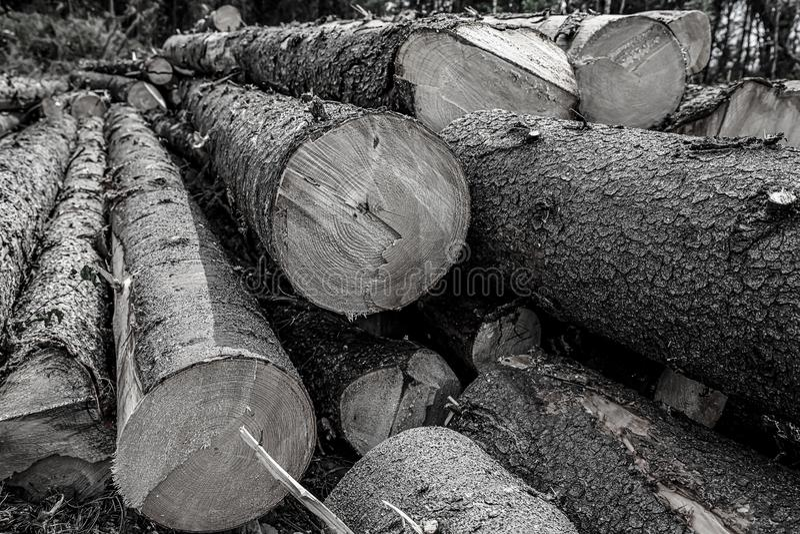 Длинными предпосылка стволов дерева большими тонизированная деревьями Основа дизайна валя кучи леса конструкции журналов стоковые изображения