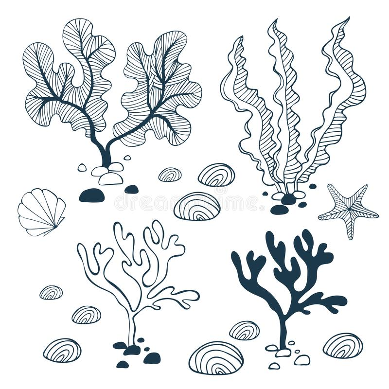 Water plants, stones, starfish and seashell collection vector illustration
