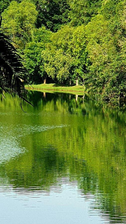 Дневное время отражений воды с зелеными деревьями стоковые фото