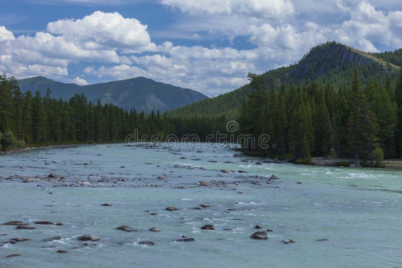 дни altai продолжают лето гор Река Argut Красивейший ландшафт гористой местности russ стоковые фото