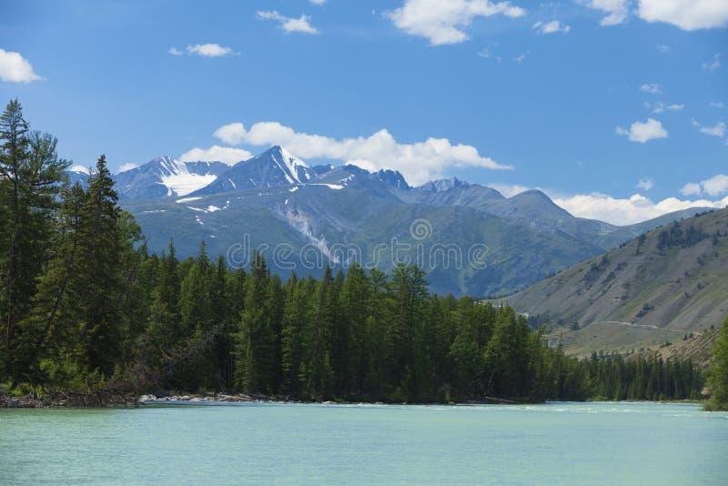 дни altai продолжают лето гор Река Argut Красивейший ландшафт гористой местности russ стоковая фотография rf