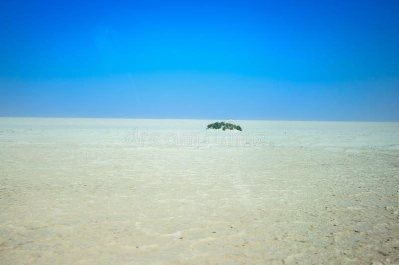 Дно Аральского Моря стоковое фото