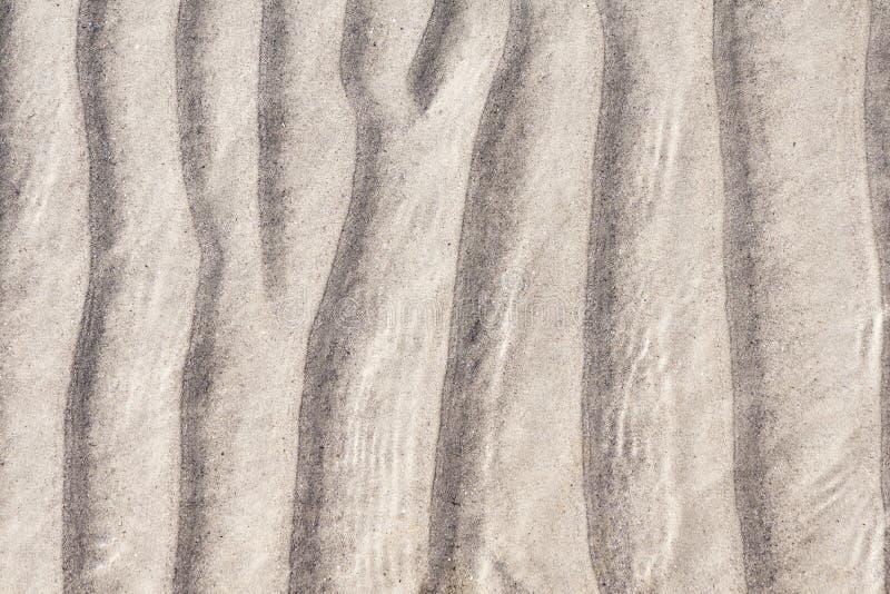 Дно песчаного пляжа стоковые изображения