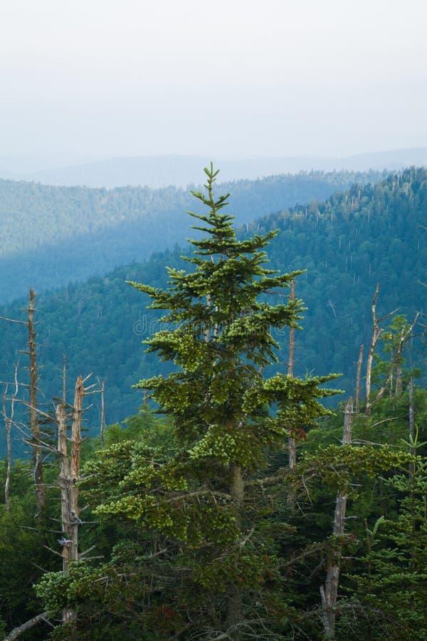 Доброе утро, Клингманс-Купол, Великие дымовые горы стоковое фото rf