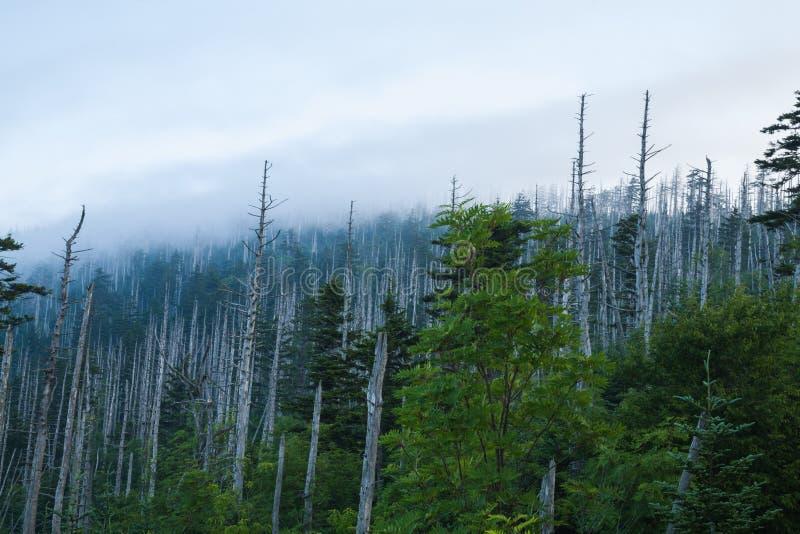 Доброе утро, Клингманс-Купол, Великие дымовые горы стоковое изображение
