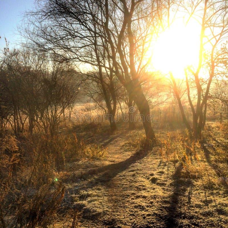 Доброе утро Украина стоковое фото rf