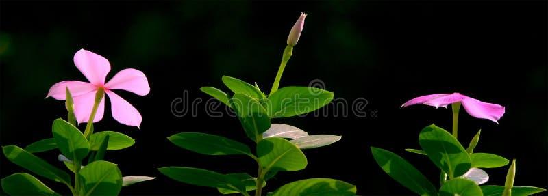 доброе утро цветка стоковые изображения rf