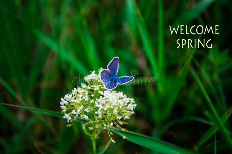 Добро пожаловать весна, текст с красивой сценой природы зеленой травы стоковые фото