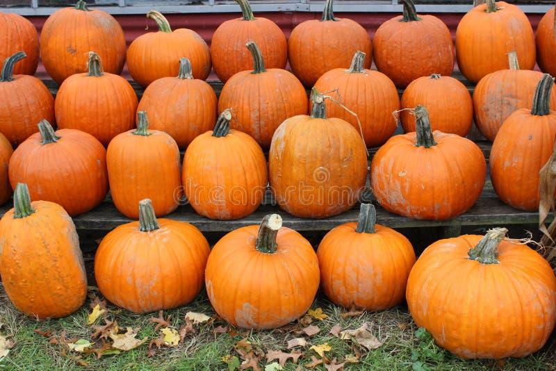 Добро пожаловать изображение листьев осени на лужайках покрытых с большим урожаем сжатых тыкв для продажи стоковая фотография rf