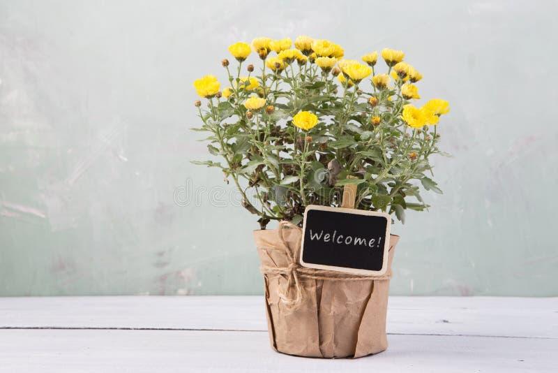 Добро пожаловать - красивые цветки в баке с карточкой сообщения стоковые изображения rf