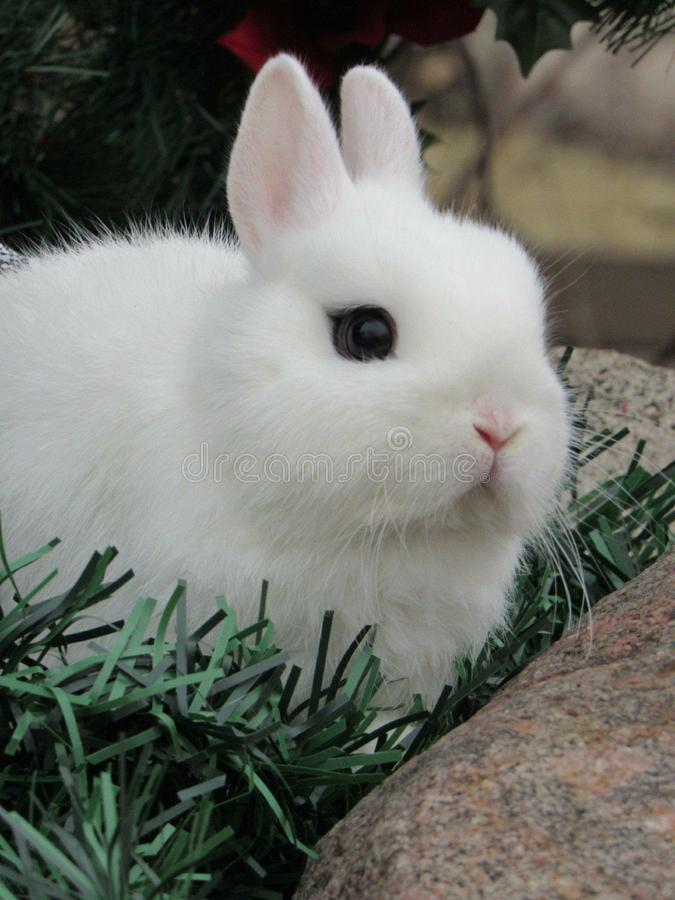 Довольно белый зайчик стоковое фото