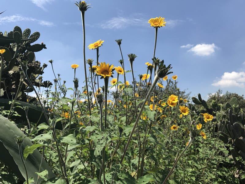 Довольно желтые цветки стоковая фотография