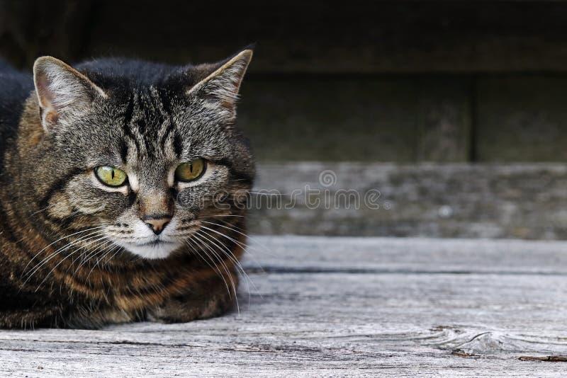 Довольно коричнев-черный кот на деревянной поверхности стоковая фотография