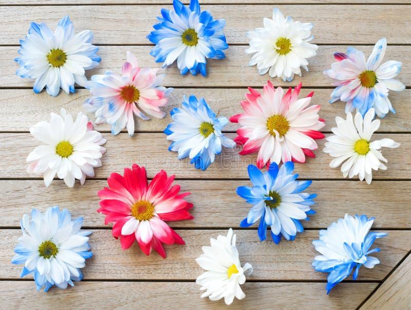 Довольно красные белые и голубые патриотические покрашенные цветки маргаритки разбросанные на деревянную предпосылку таблицы Оно  стоковое изображение rf