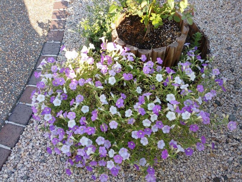 Довольно небольшие цветки в баке стоковые фотографии rf