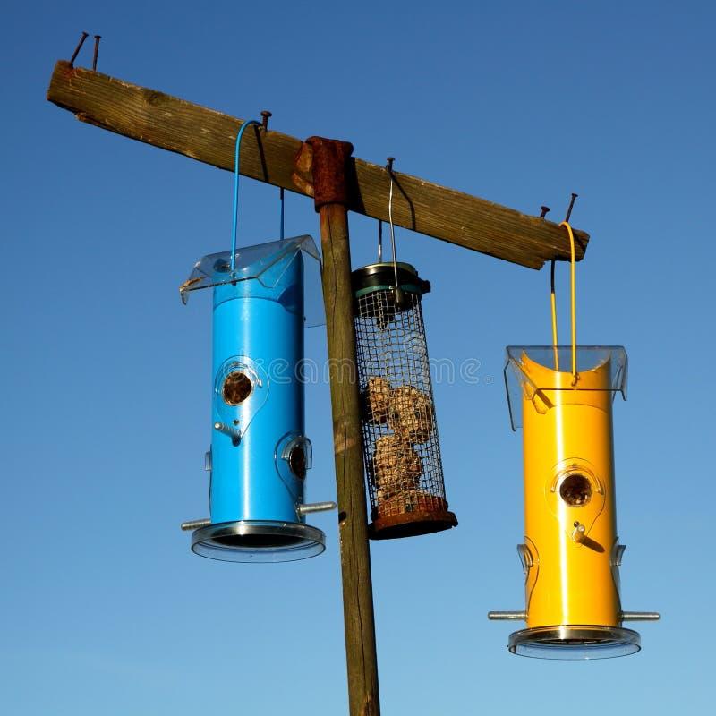 Довольно голубые и желтые фидеры птицы стоковое изображение
