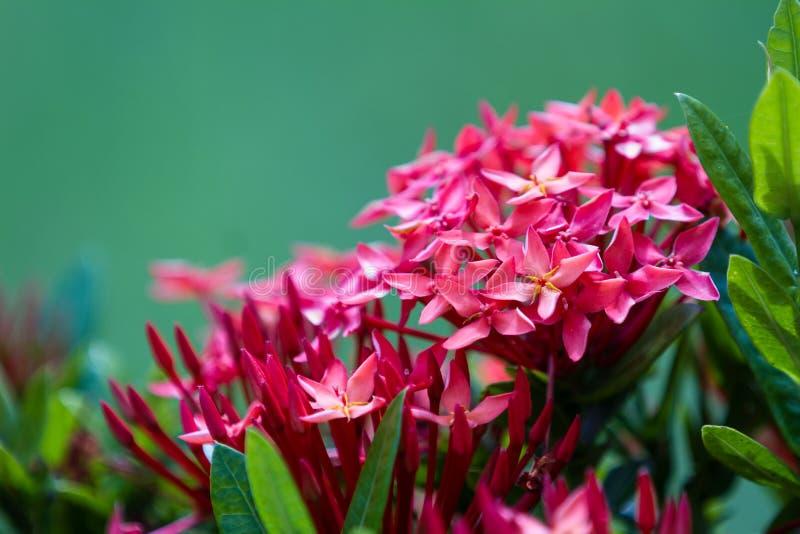 Довольно тропические цветки стоковые фотографии rf