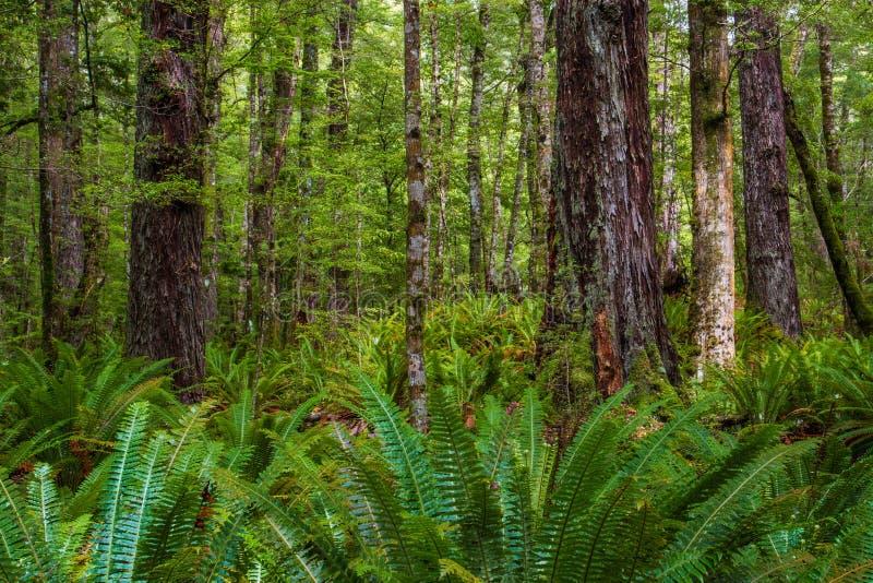 Дождевой лес стоковая фотография