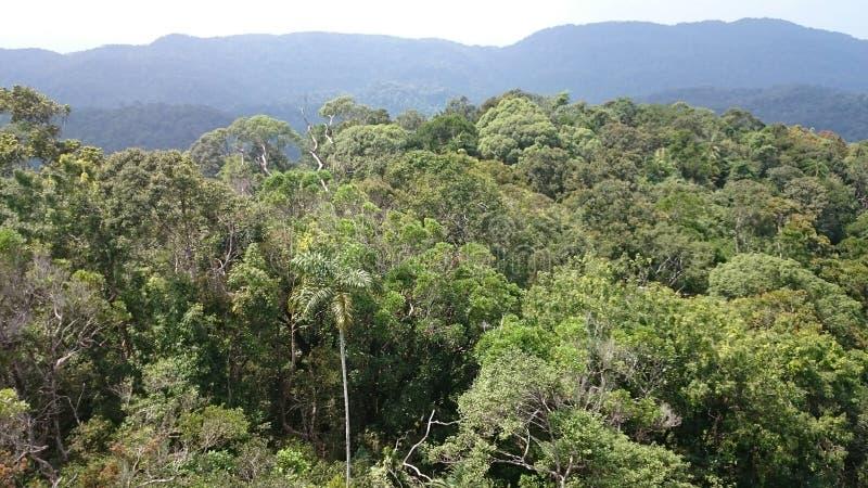 Дождевой лес sinharaja взгляда сверху - стоковое изображение
