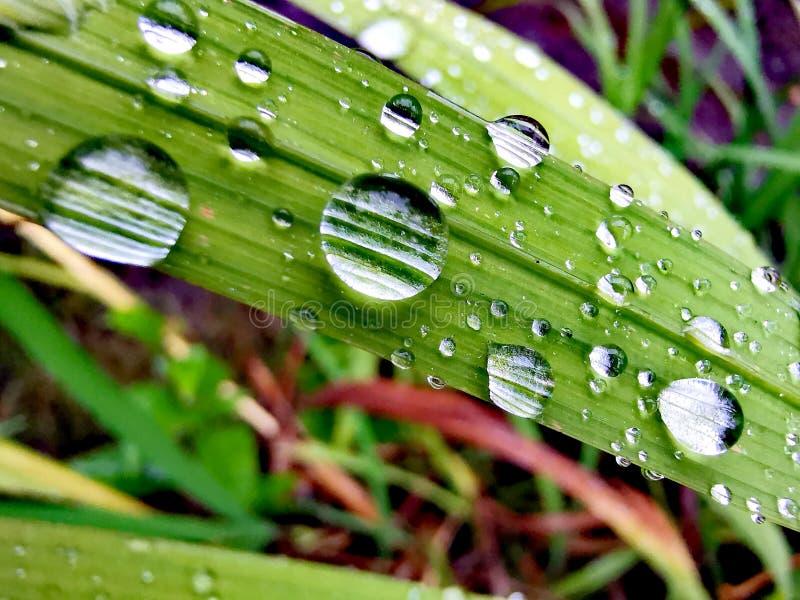 Дождевые капли в лист стоковая фотография