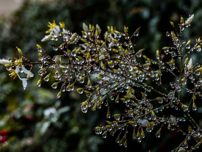 Дождевые капли на густолиственном кусте делают кристаллическую предпосылку света и искры стоковые изображения