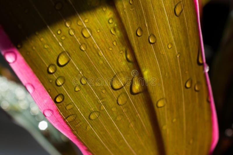 Дождевые капли на красочных листьях в тени стоковая фотография