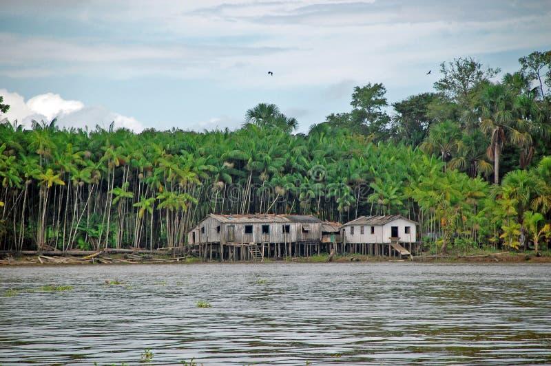 дождевый лес жизни стоковые фото