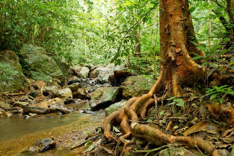 дождевый лес ландшафта стоковое фото